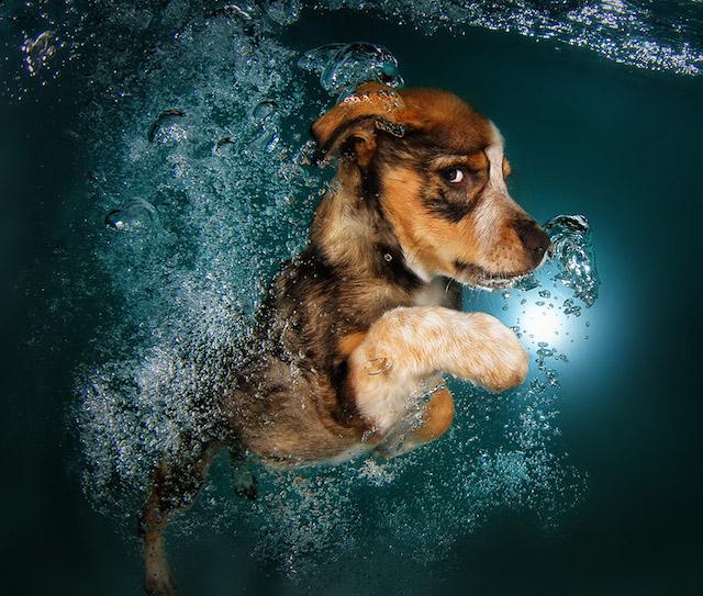 Собачий заплив