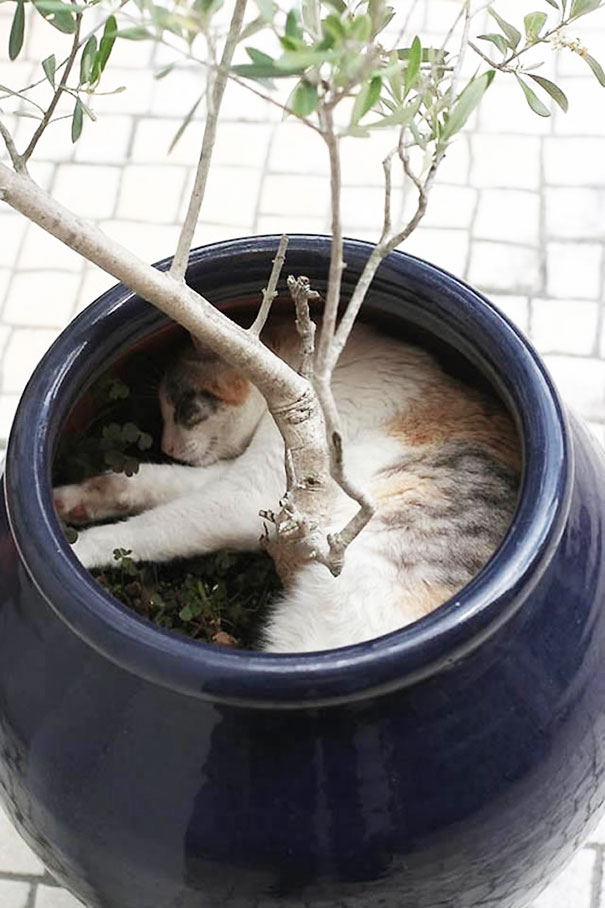 cat-in-flowerpot-10__605