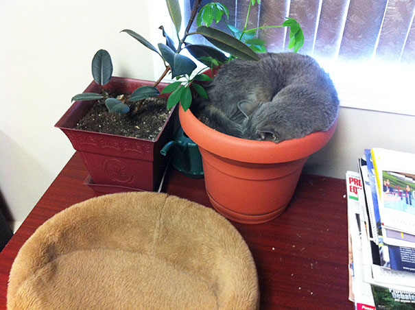 cat-in-flowerpot-11__605