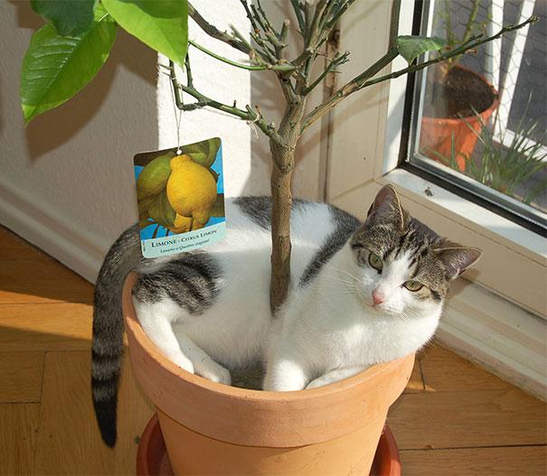 cat-in-flowerpot-1__605