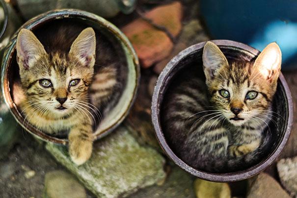 cat-in-flowerpot-24__605