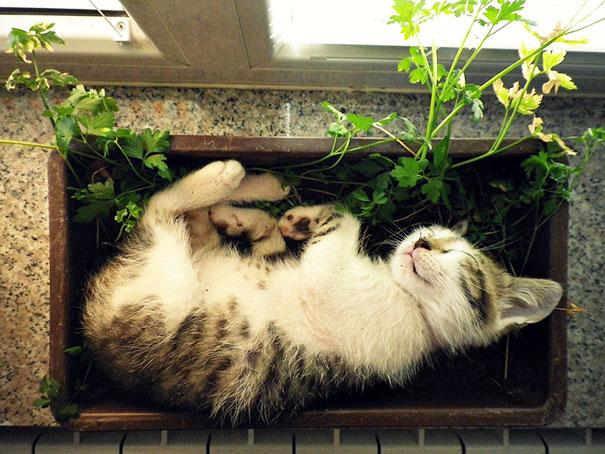 cat-in-flowerpot-31__605