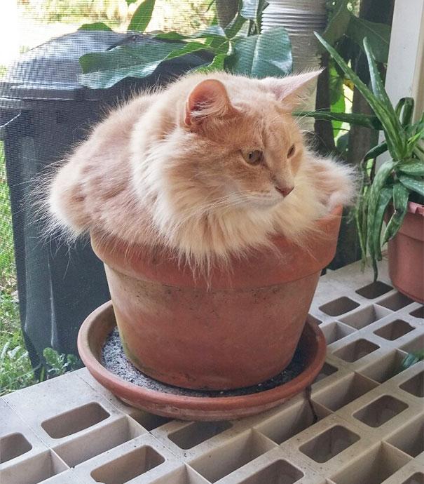 cat-in-flowerpot-3__605