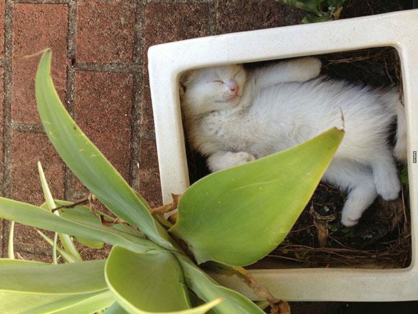 cat-in-flowerpot-9__605