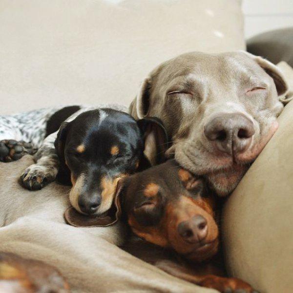 dog-dogs-bffs-best-friends-12