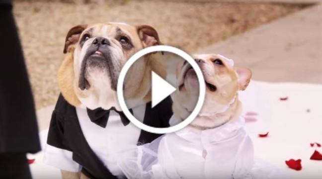 Весільна церемонія, на яку ніхто не очікував