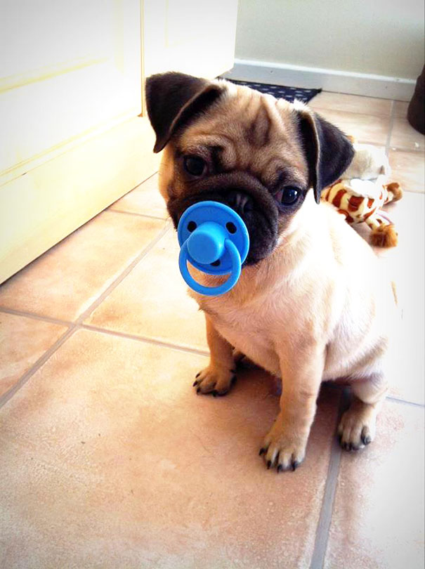 pet-toys-32__605