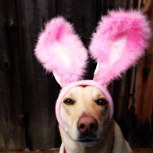 stylesaveus-dog-with-bunny-ears1