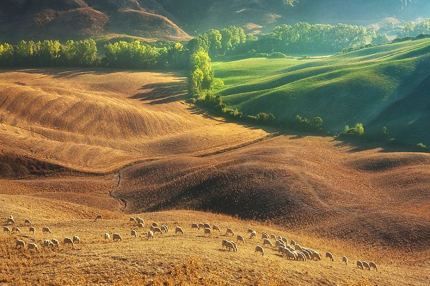 Summer-pasture-950__880