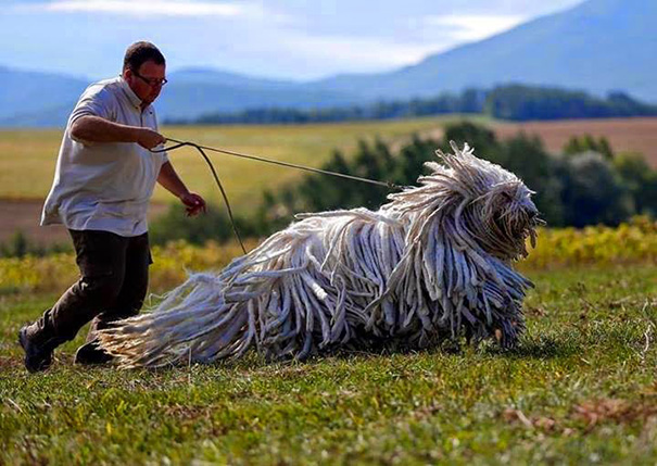 big-dog-funny-animal-photos-16__605
