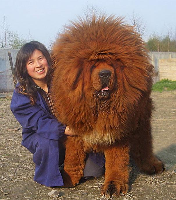 big-dog-funny-animal-photos-3__605