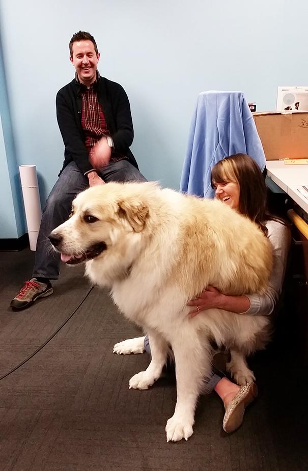 big-dog-funny-animal-photos-6__605