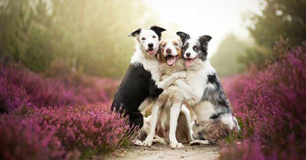 Щира дружба чотирилапих