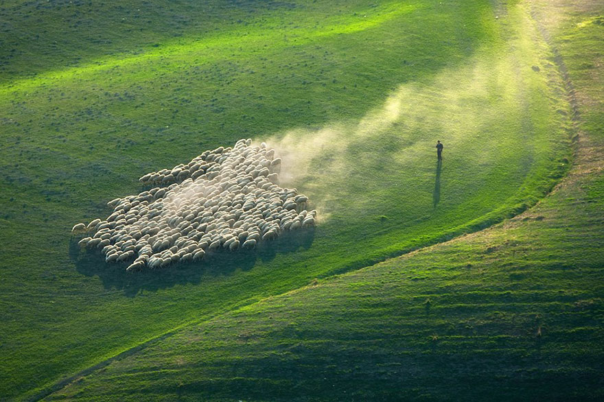 field-landscape-photography-only-sheep-marcin-sobas-tuscan-2