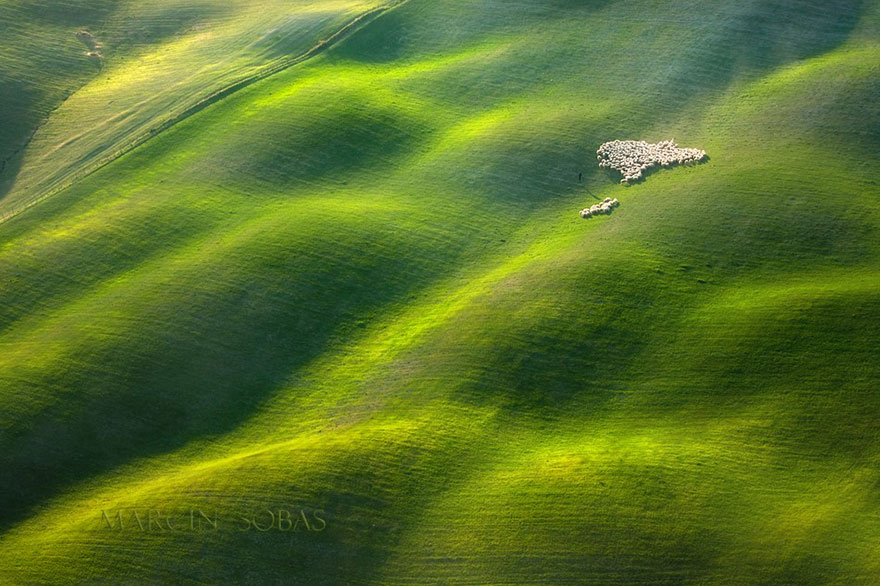 field-landscape-photography-only-sheep-marcin-sobas-tuscan
