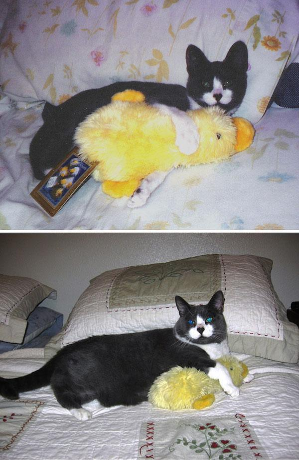 pets-growing-up-with-toys-3__700