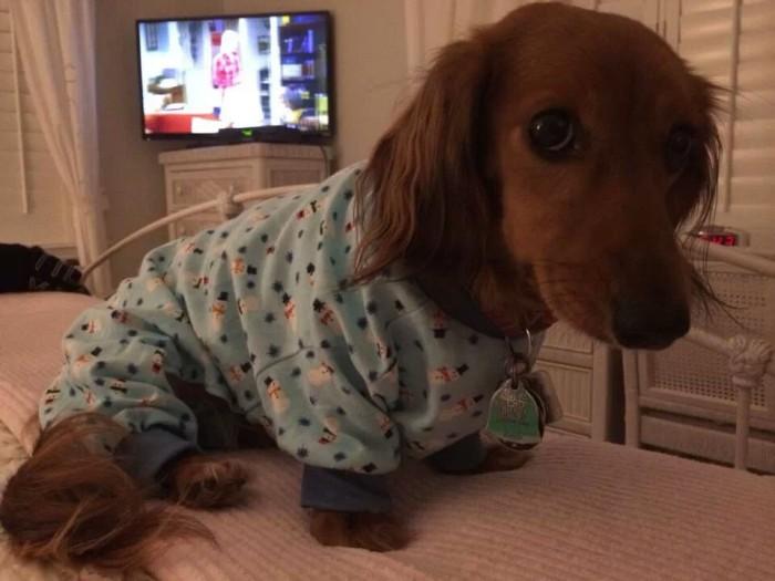Baby_dog_in_pijamas-700x525