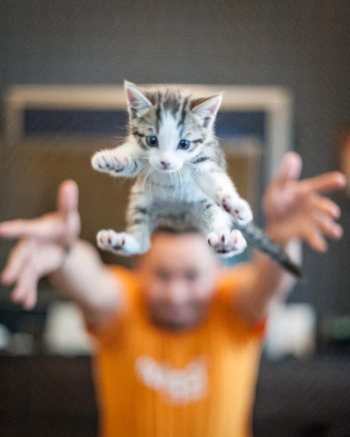 Catch_the_cute_kitten-700x875