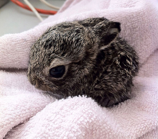Cute_little_baby_bunny