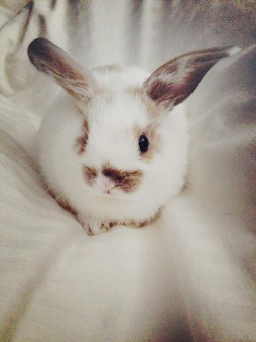 Cute_little_bunny