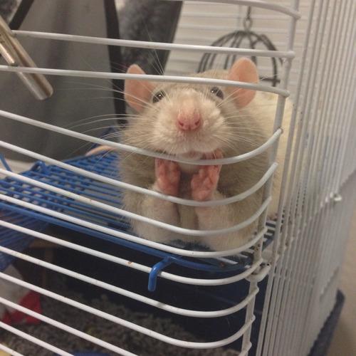 Cute_little_hamster