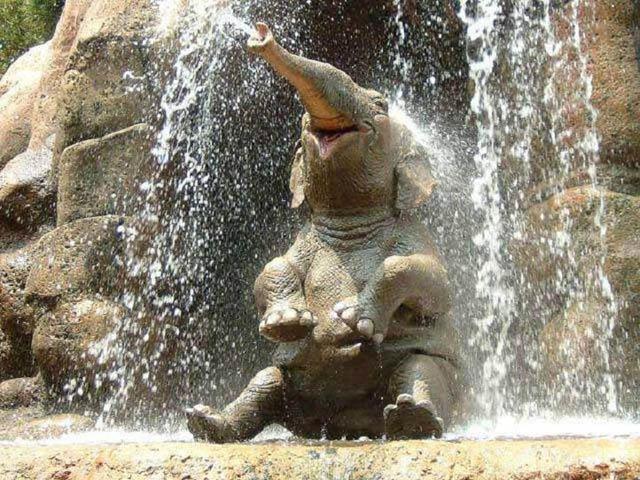 Elephant_having_a_shower