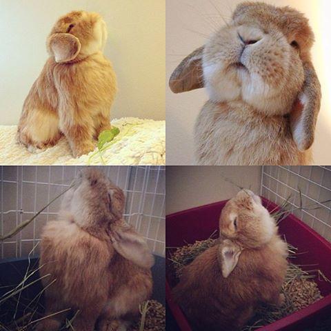 Fabulous_rabbit
