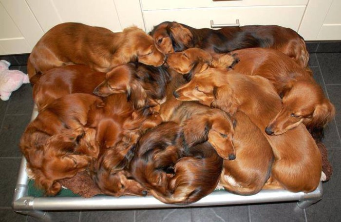 Giant_pile_of_wieners-700x455