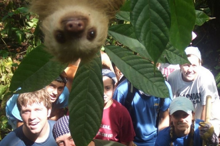 a_sloth_photobombs_a_group_of_students_in_Costa_Rica-700x465