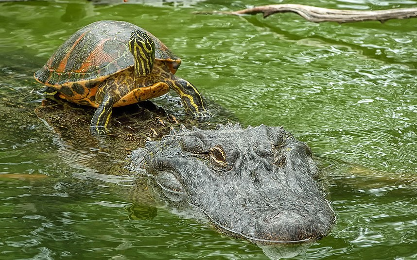 POTD-Terrapin-take_2657385k