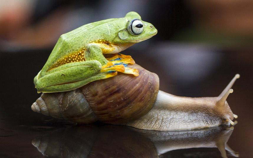 animals-frog_3148764k
