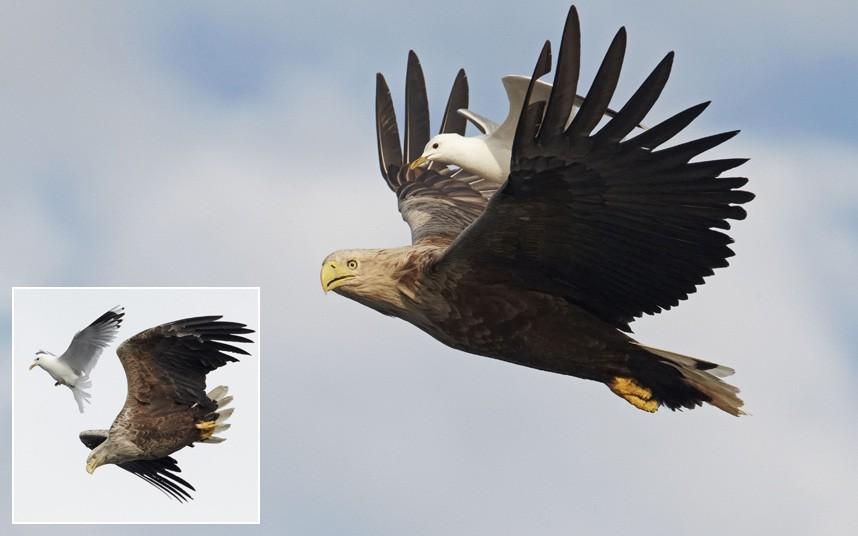 birds-piggyback_2649562k