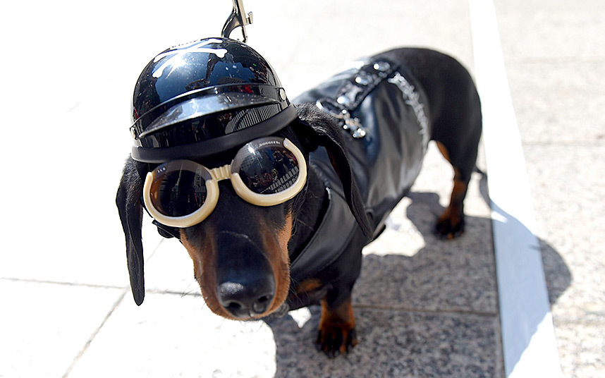 dressing-doggles_3445840k
