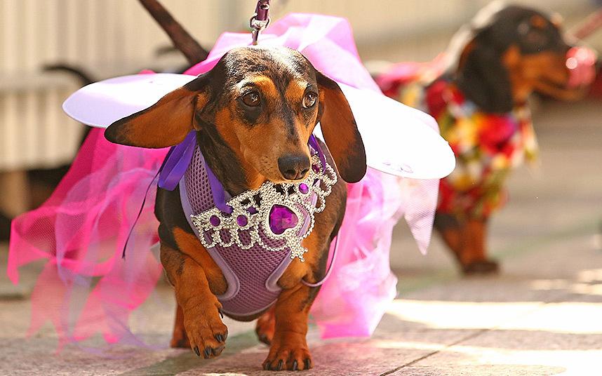 dressing-fairy_3445839k