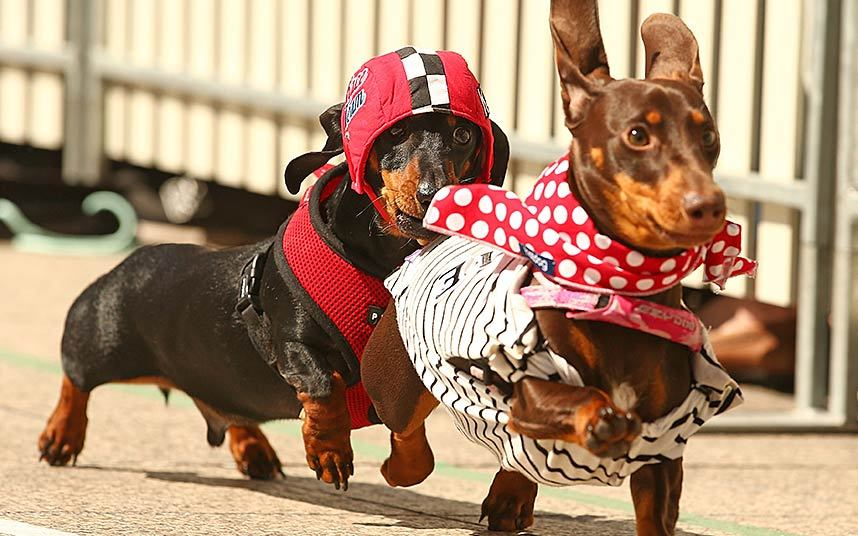 dressing-race_3445833k