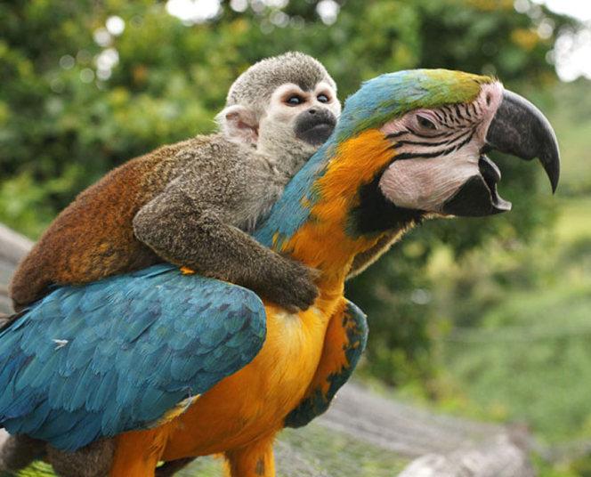 monkey-parrot_1743_3218284k