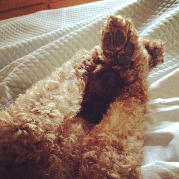 Сонні собаки неймовірно смішні!