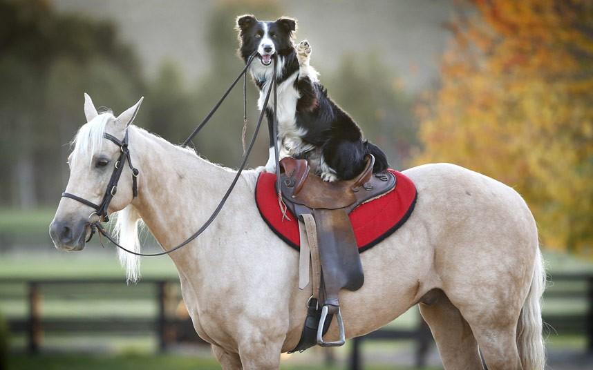 potd-dog-horse_2915148k