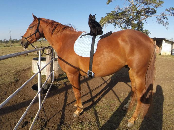 potd-horse-cat-fun_3174229k