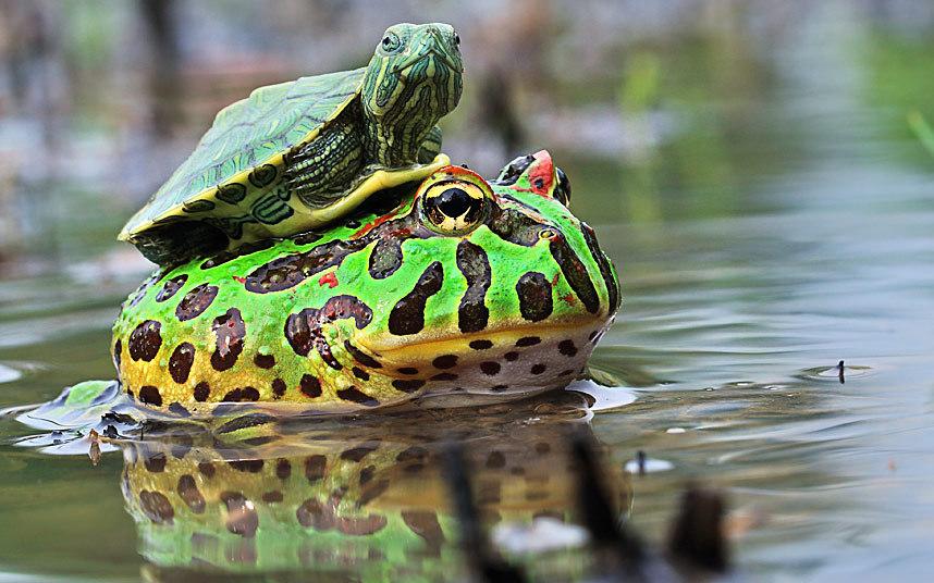 potd-lead-turtle_f_3184300k
