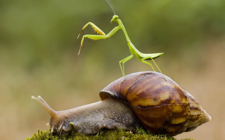 potd-mantis-slug_2832228k