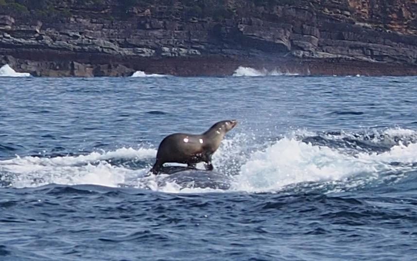 potd-whale-seal_3443030k