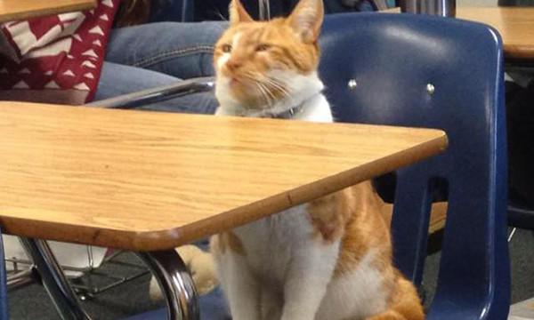 Кіт-студент із Каліфорнії