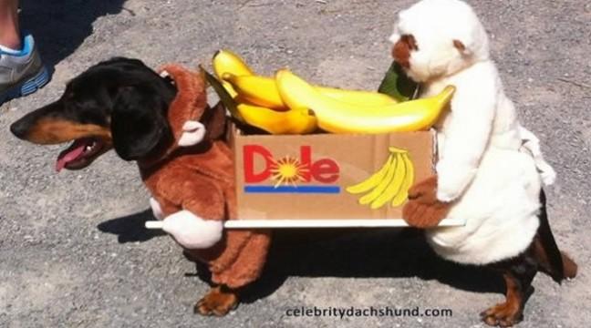 Веселі тварини в бананових костюмах