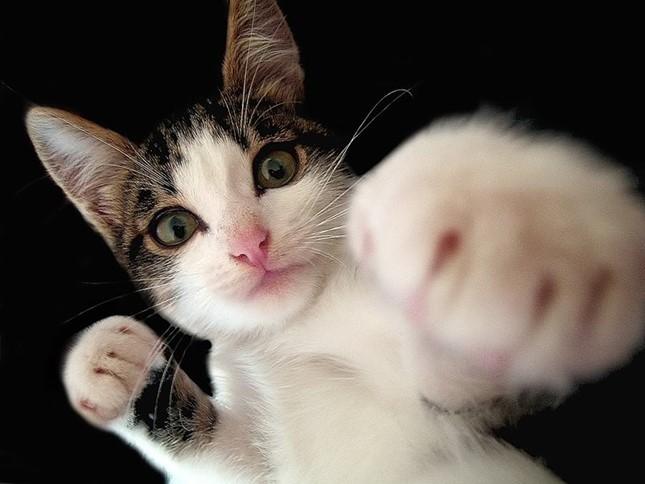 Котячі бої без правил