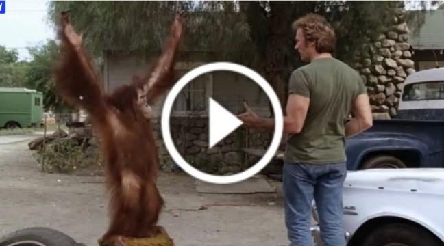 Забавний орангутанг