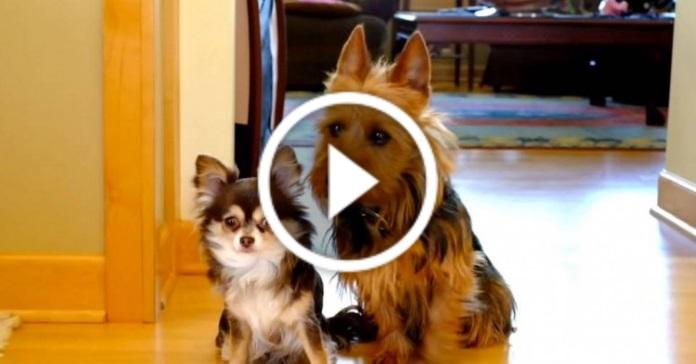 Смішне відео про собак. Викриття