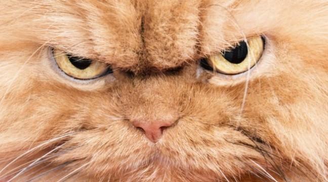 На це власники котів закривають очі…