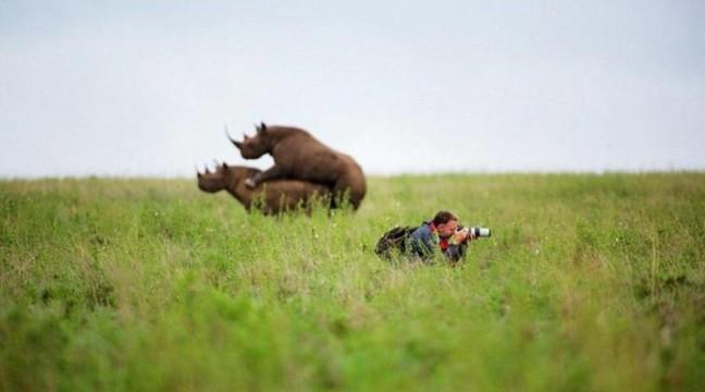 15 неочікуваних фото тварин