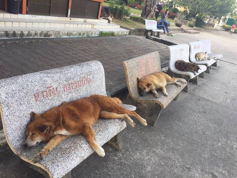 these-dogs-are-all-waiting-for-the-bus